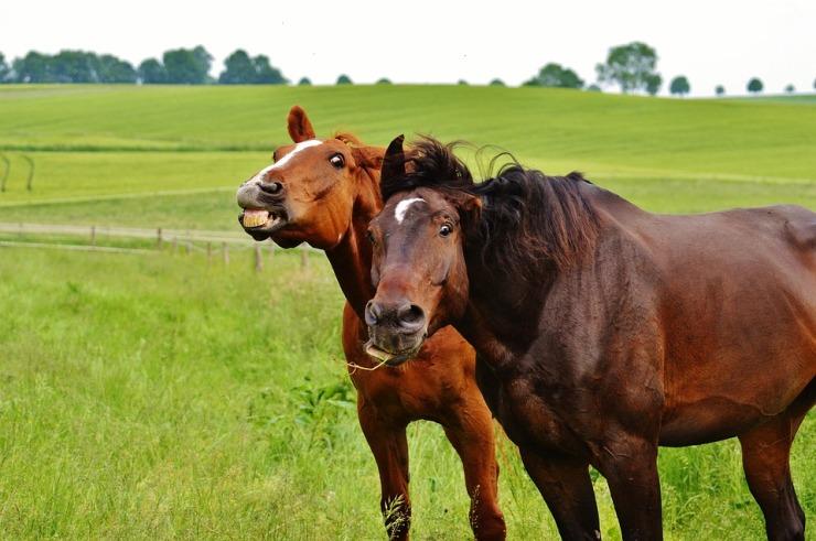 horses-1427230_960_720