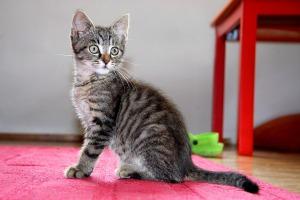 cat-1528745_960_720 (1)