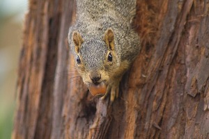 squirrel-1444350_960_720