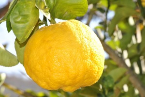 lemon-181650_960_720